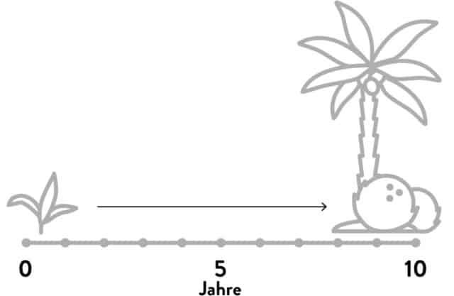 Zeitstrahl zeigt, dass es ca. 10 Jahre braucht bis eine Kokospalme ganzjährig erntereife Früchte trägt.