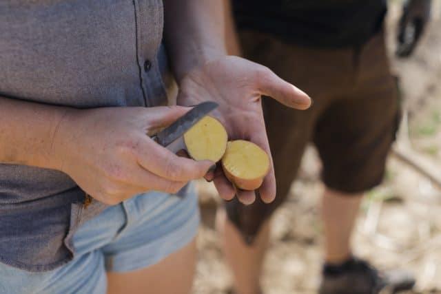 Belinda - die Kartoffel